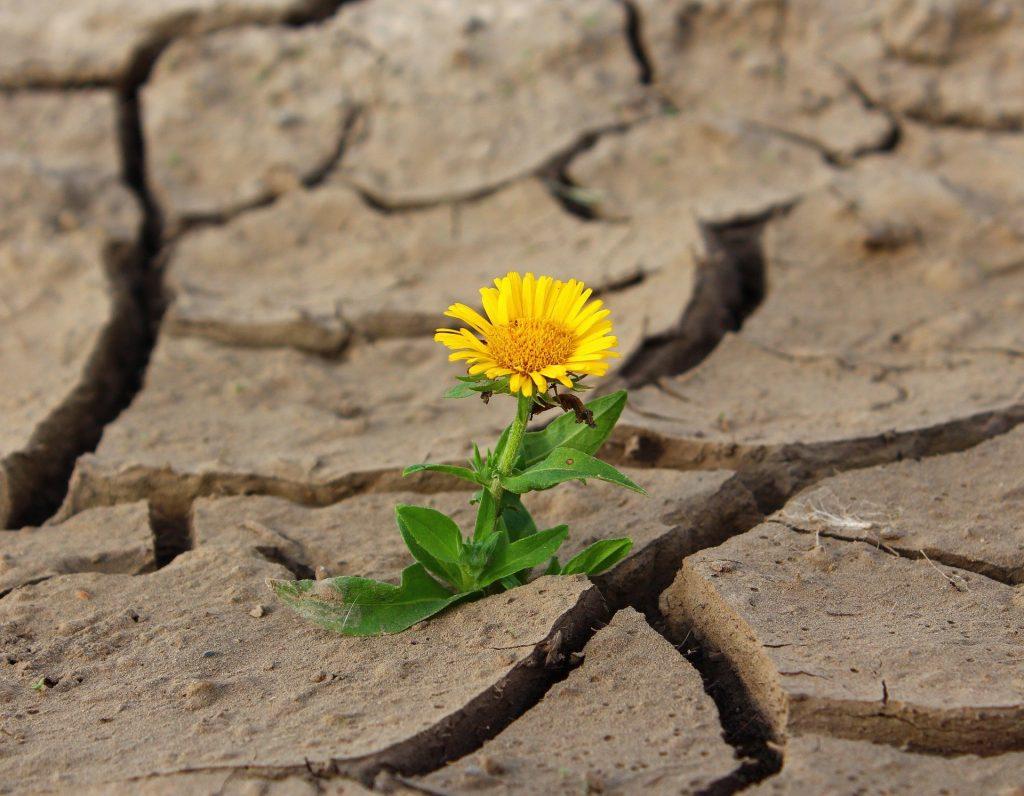Flower in mud