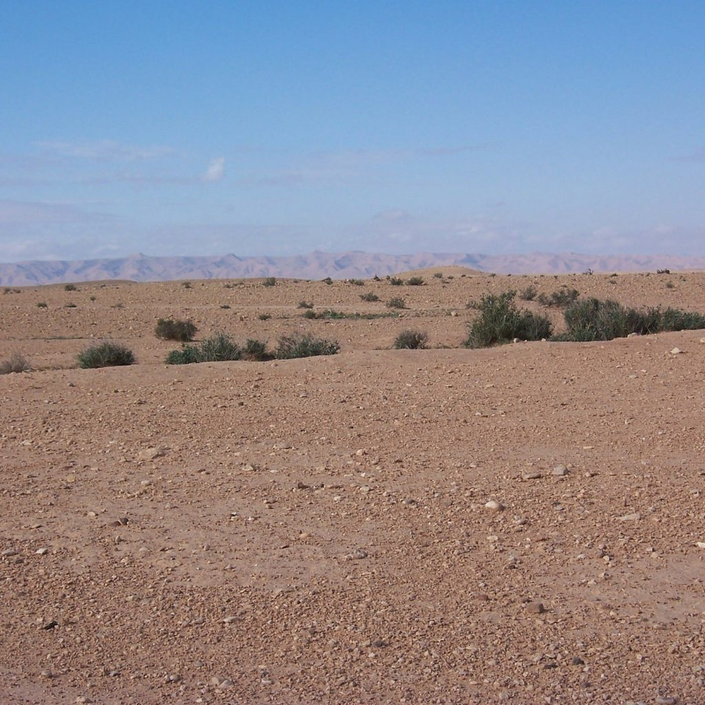 image of a desert wilderness brown sand, a few small green bushes and blue sky